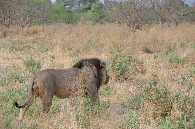 Safari en Botswana (Blog La vida en el aire)