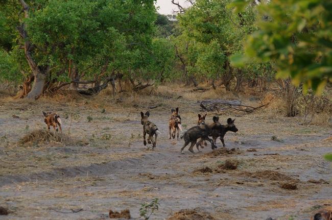 safari-botswana-blog-lavidaenelaire-12