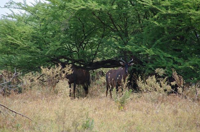 safari-botswana-blog-lavidaenelaire-14