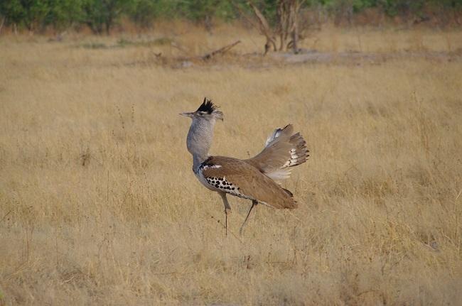 safari-botswana-blog-lavidaenelaire-20