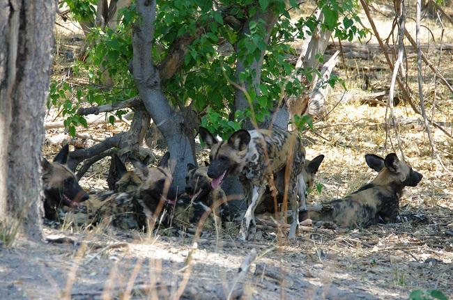 safari-botswana-blog-lavidaenelaire-23