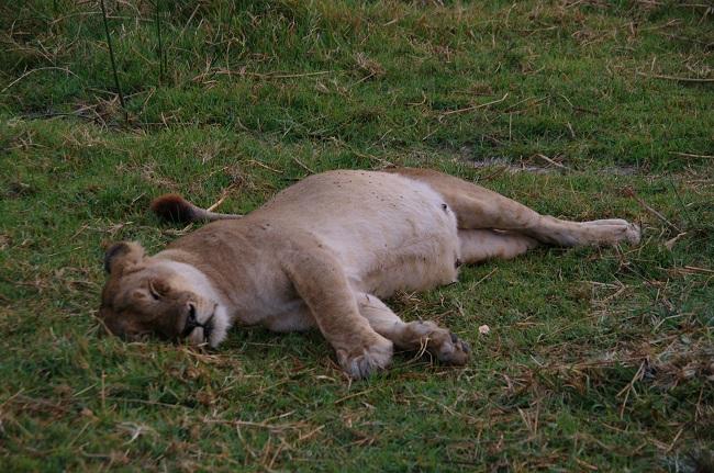 safari-botswana-blog-lavidaenelaire-32