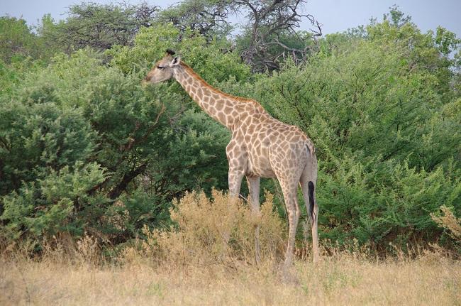 safari-botswana-blog-lavidaenelaire-39