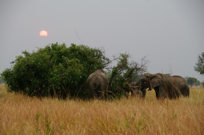 safari-botswana-blog-lavidaenelaire-42