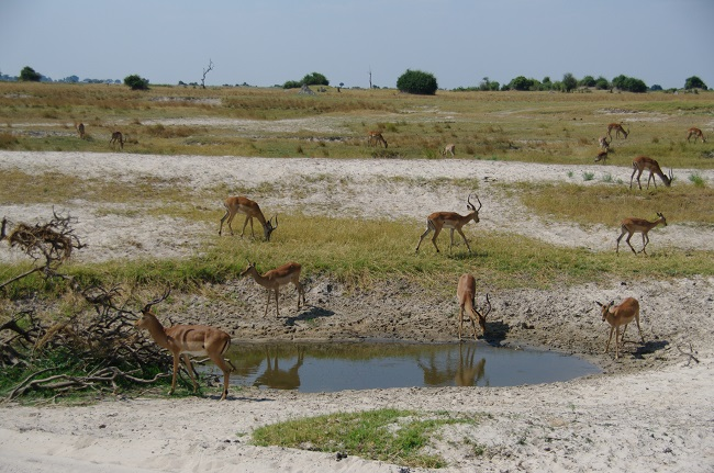 safari-botswana-blog-lavidaenelaire-7